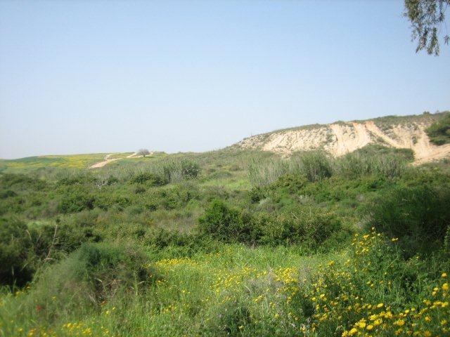 גבעות הכורכר נס ציונה