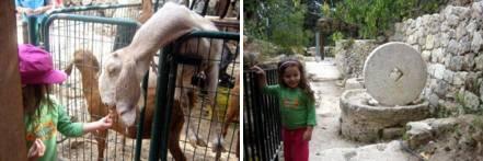 עין יעל - טיולים קצרים עם הילדים