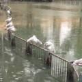 בריכת הדגים ליד קיבוץ גשר - טיולים בשבת עם הילדים