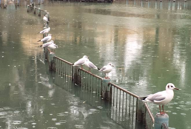 בריכות הדגים ליד קיבוץ גשר
